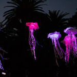 Festival-of-Light-Art-1306-x-548-px-Jelly